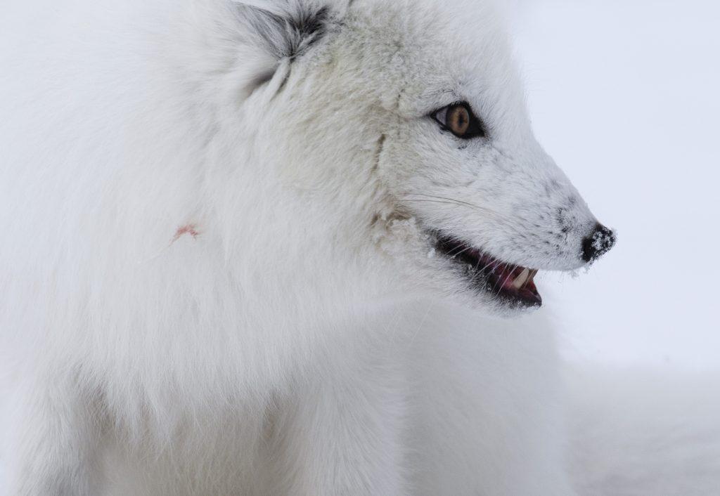 polar_tales_22_melissa_schaefer